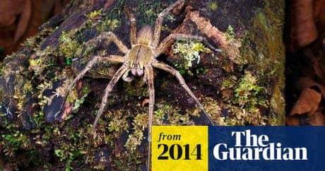 Essex Woman Finds Eggs Of World S Most Venomous Spider In Her Shopping World News The Guardian