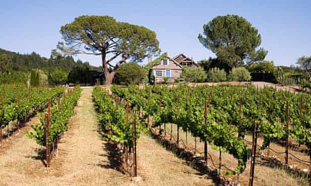 California vineyards in Sonoma Valley
