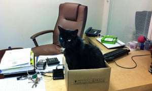 Black cat in a cardboard box on an office desk