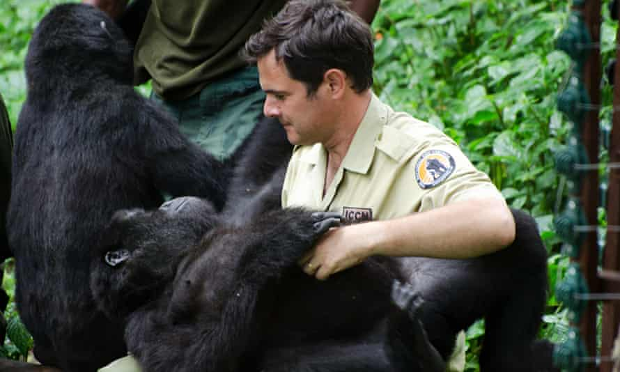 Emmanuel de Merode sitting next to a gorilla, with one on his lap