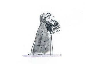 Schnauzer: A big supporter of Movember.
