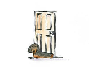 Dachshund: A long, loving and inquisitive dog.