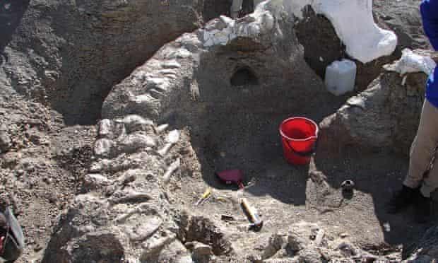 Dinosaur bones new species bones dreadnoughtus schrani