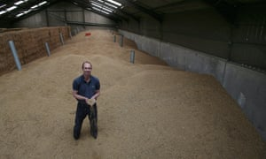 Andrew Barr in Wheat Grain store - Wheat (in hands) and Oats on his farm near Lenham, Kent. Field, stubble after harvest, 4 September 2014.