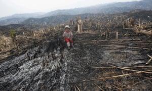 Burma deforestation