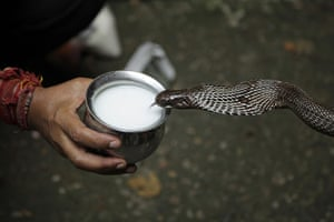 20 photos: Milk is offered to a snake during the Nag Panchami festival in Jammu, India