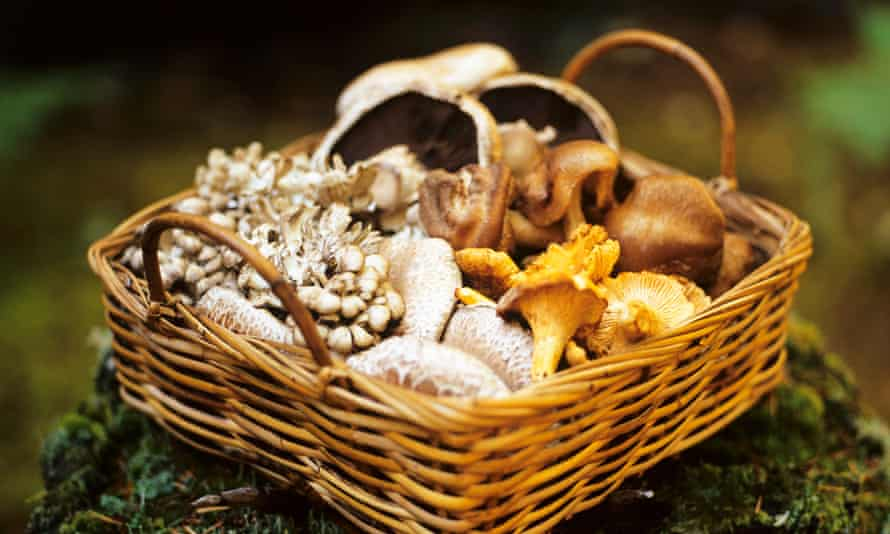 A selection of wild mushrooms