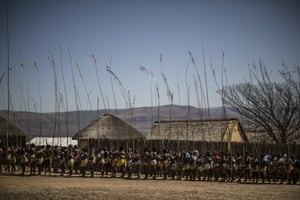 Ceremonial reeds are carried at the eNyokeni Royal Palace in Nongoma in the KwaZulu-Natal region.