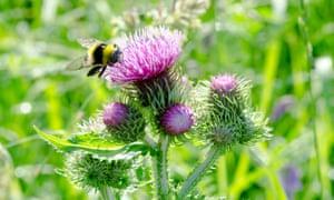 bumblee bee honey nicotinoids