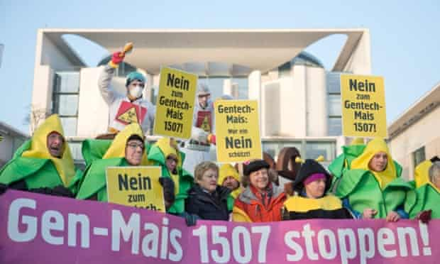 People protest in Berlin against the authorisation of genetically modified maize with signs and banners reading 'Stop GMO Maize 1507'.