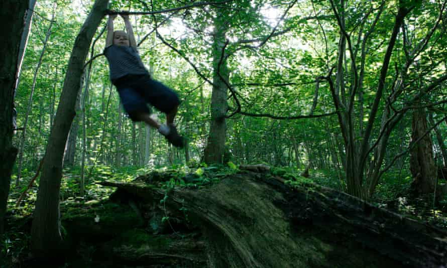 A child climbing trees in Cropton Bank Woods, north Yorkshire.
