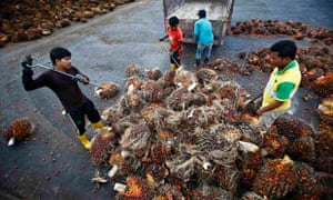 Workers collect palm oil fruits in a factory near Kuala Lumpur