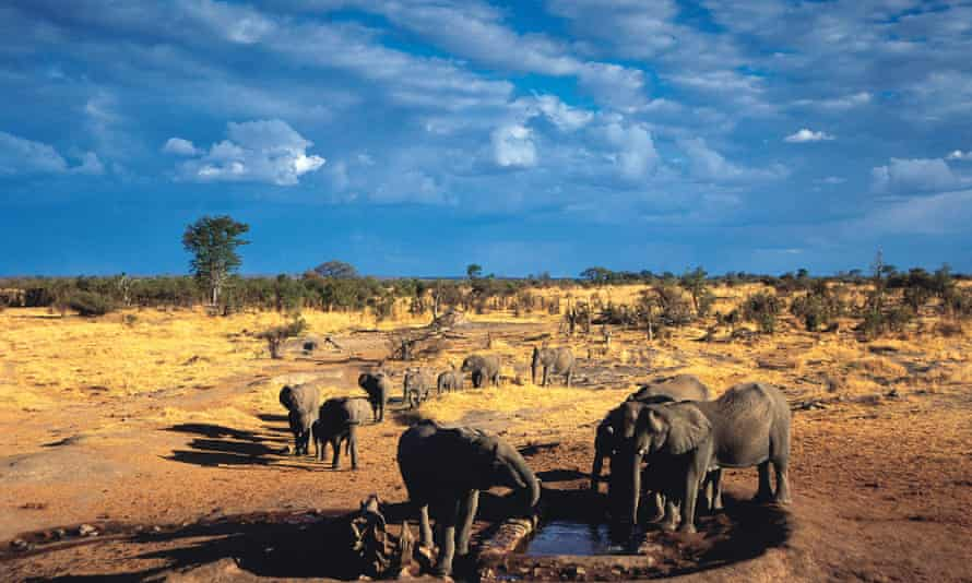 A family of elephants gather to drink at Big Toms waterhole near Robins camp in Hwange National Park in Zimbabwe.