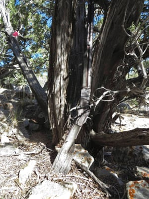 A Winchester Model 1873 found by park workers in Great Basin National Park, Nevada, leaning against a tree.