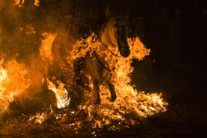 The tradition dates back 500 years and is meant to purify the animals with the smoke of the bonfires and protect them for the year to come