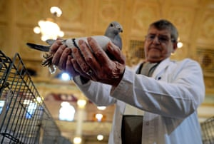 Show Chairman David Trippett inspects a pigeon. Many owners hope their bird will take home best in show.