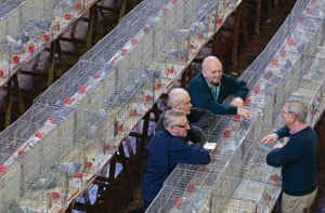 Pigeon fanciers discuss the birds at the show.