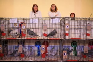 Judges stand behind some of the show's prizewinning birds.