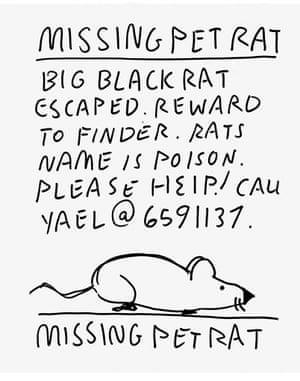 Poison the rat