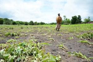 Woman walks through flooded crop field in Malawi