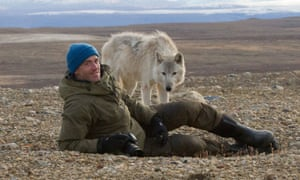 'Mesmerising viewing':  Gordon Buchanan in The Snow Wolf Family and Me.