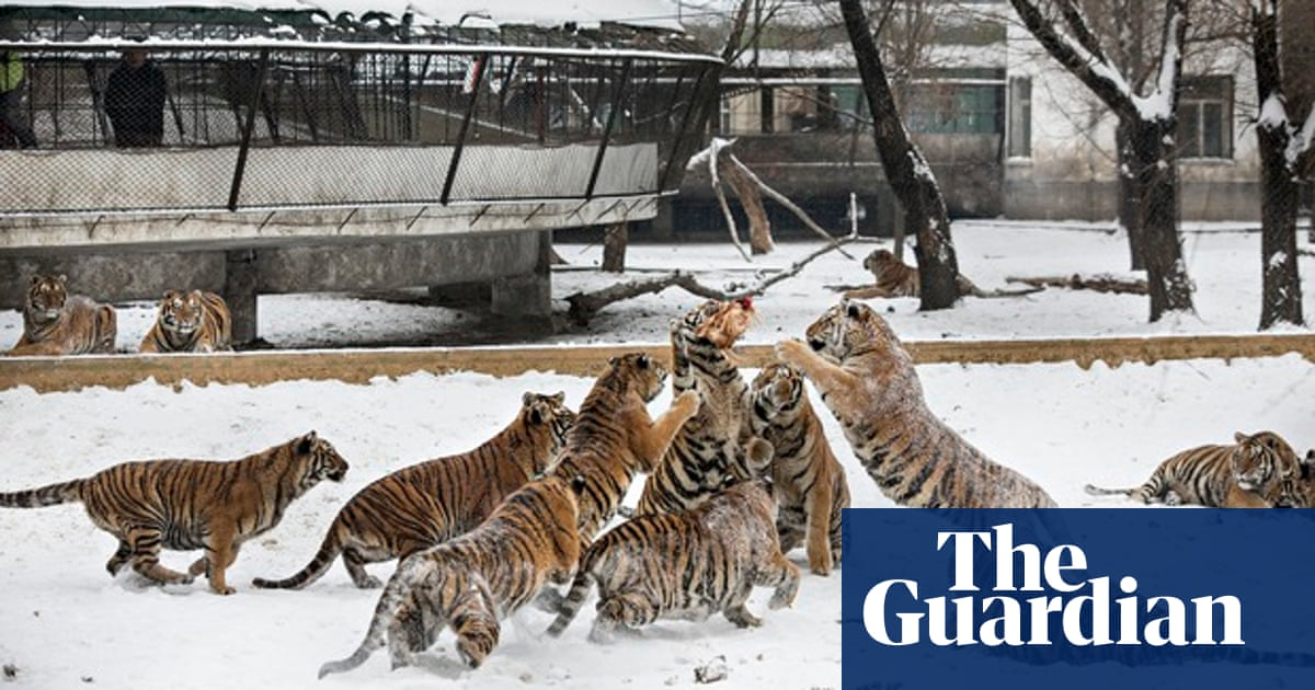 tiger rich investments ltd