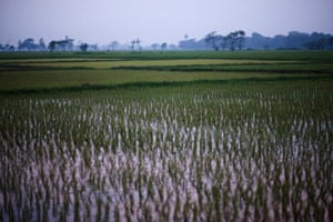 Paddy fields at dusk in Pyay district, Bago region, Burma
