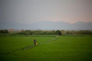 Farmland with farmer walking through a field, Burma