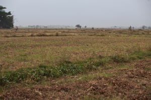Open land in Paung Tel township now registered as forest