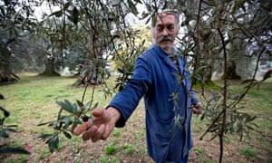 An Italian olive oil producer