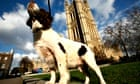 """A spaniel outside Westminster"""