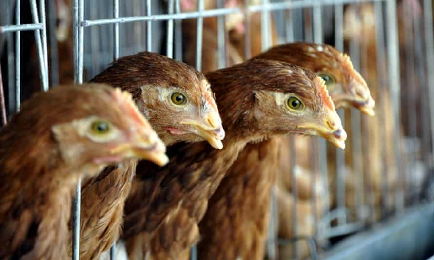 A third outbreak of avian flu has been reported in Washington state.