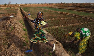 A family at their bean farm in Mali. Bill and Melinda Gates predict agricultural productivity will increase by 50% in Africa by 2030.