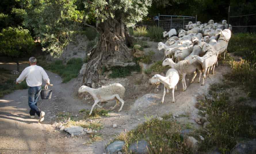 Seen and herd: author Chris Steward with sheep in the Alpujarras.
