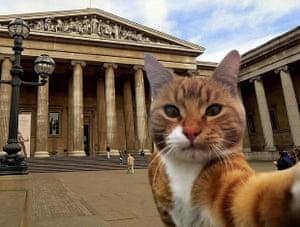 Curatorial Cats #MuseumSelfie (new)