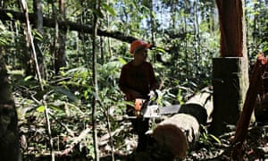 Palm oil companies admit they have little control over whether their suppliers engage in deforestation.