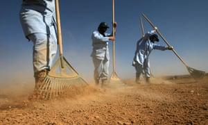 landmine detecting women rakes