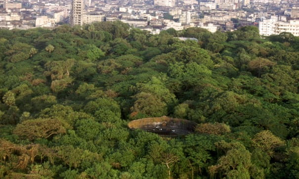 Death in the city: How a lack of vultures threatens Mumbai's 'Towers