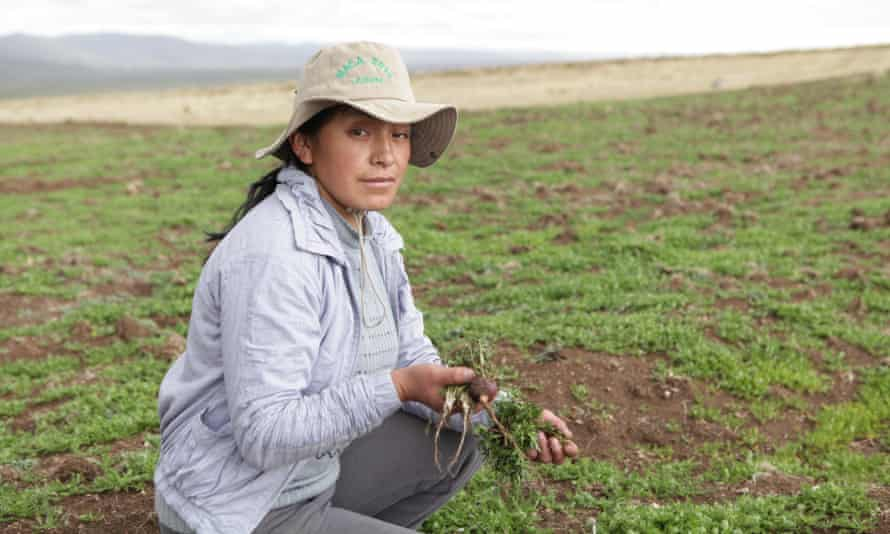 Maca farmer Pilar Condor has experienced a huge rise in her income from the increased demand for the root.