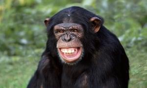 chimp smiling