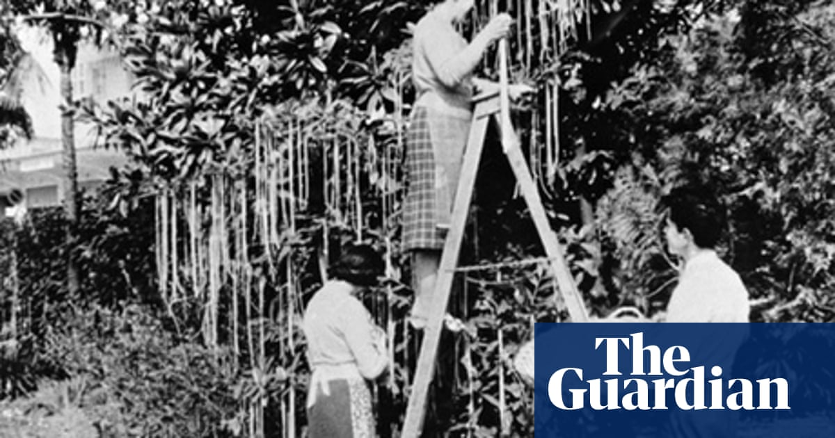 Did you know spaghetti grows on trees? | From the Guardian | The