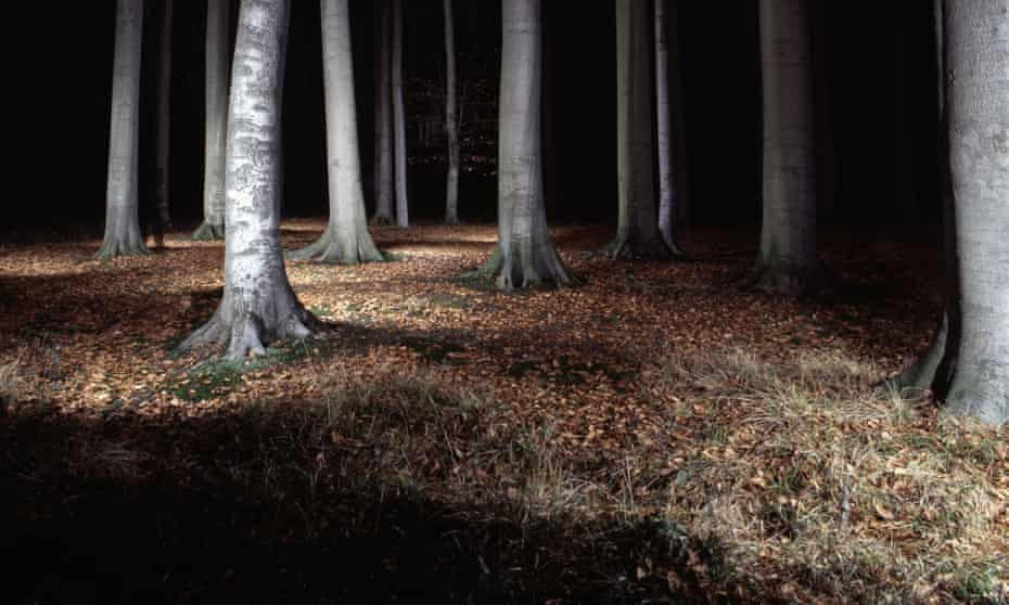 trees lit up in forest