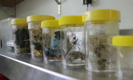 Marine debris collected from sea turtles