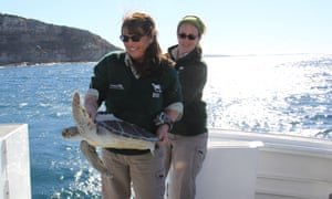 Libby Hall (front) releasing a sea turtle back into the wild after it was treated at the wildlife hospital.