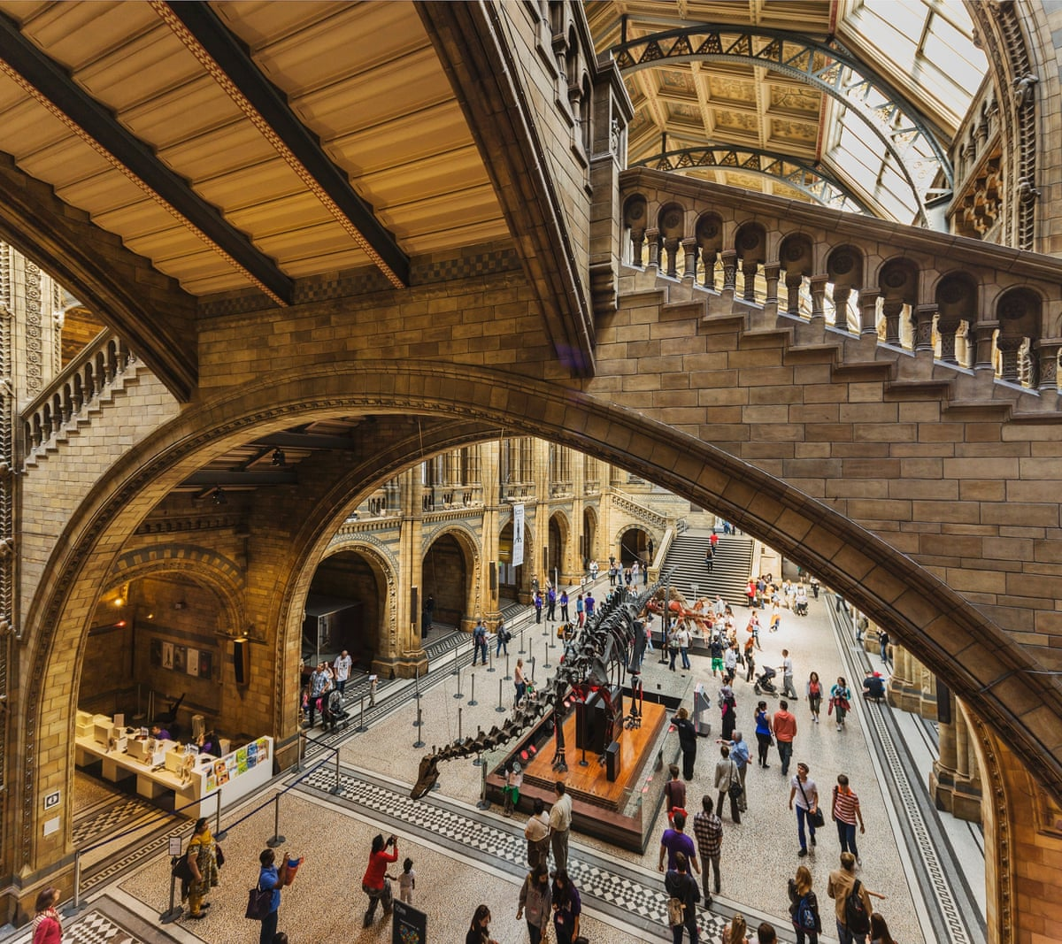 Museum Of Nature And Science Wedding: Natural History Museum Main Hall Displays