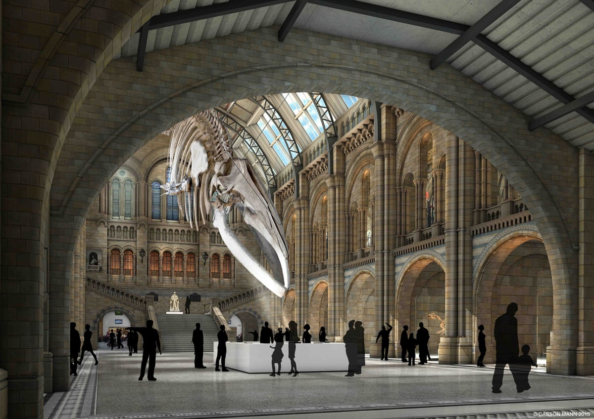Foyer Museum Uk : Natural history museum main hall displays in pictures