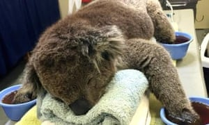 Jeremy the Koala