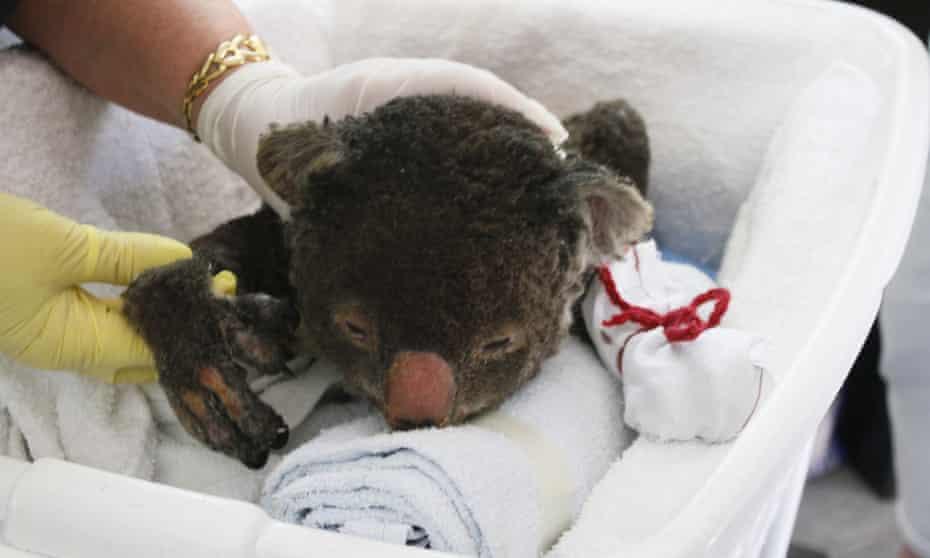 burned koala mittens