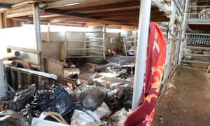 Inside the Ezadeen's livestock hold, where the Syrian migrants travelled.