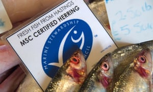 BT44W6 Fresh Hastings fish Marine Stewardship Council certified sustainable herring on sale at Rock-a-Nore Fisheries The Stade Hastings. Image shot 10/2010. Ex